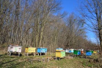 Zeer veel bijenvolken in oost Europa.